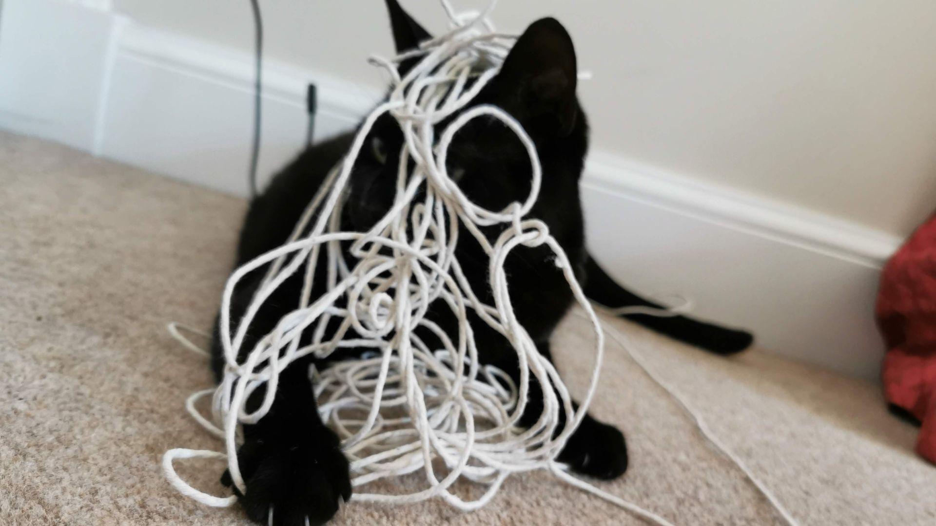 una foto de un gato negro cubierto con una cuerda, que representa cables que se enredan durante una sesión de juegos de realidad virtual.  Su nombre es Layla, y ella es la mejor de todos los gatos.