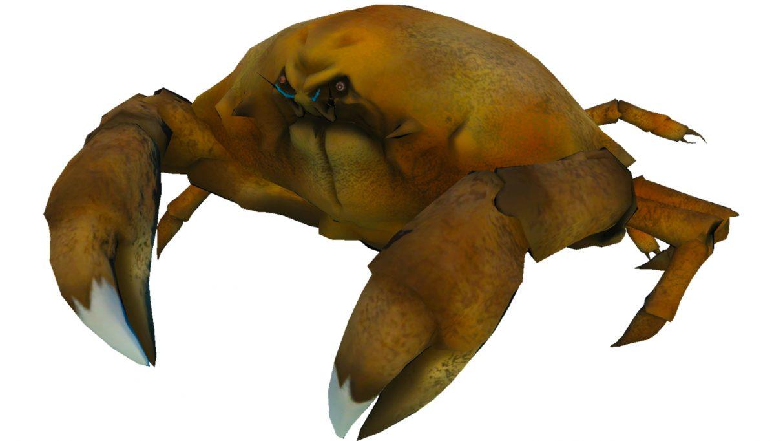 Un cangrejo Calappa.  Es muy redondo y bulboso, como una cruz de piedra.